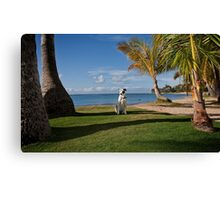 I'm Stranded In Paradise Canvas Print