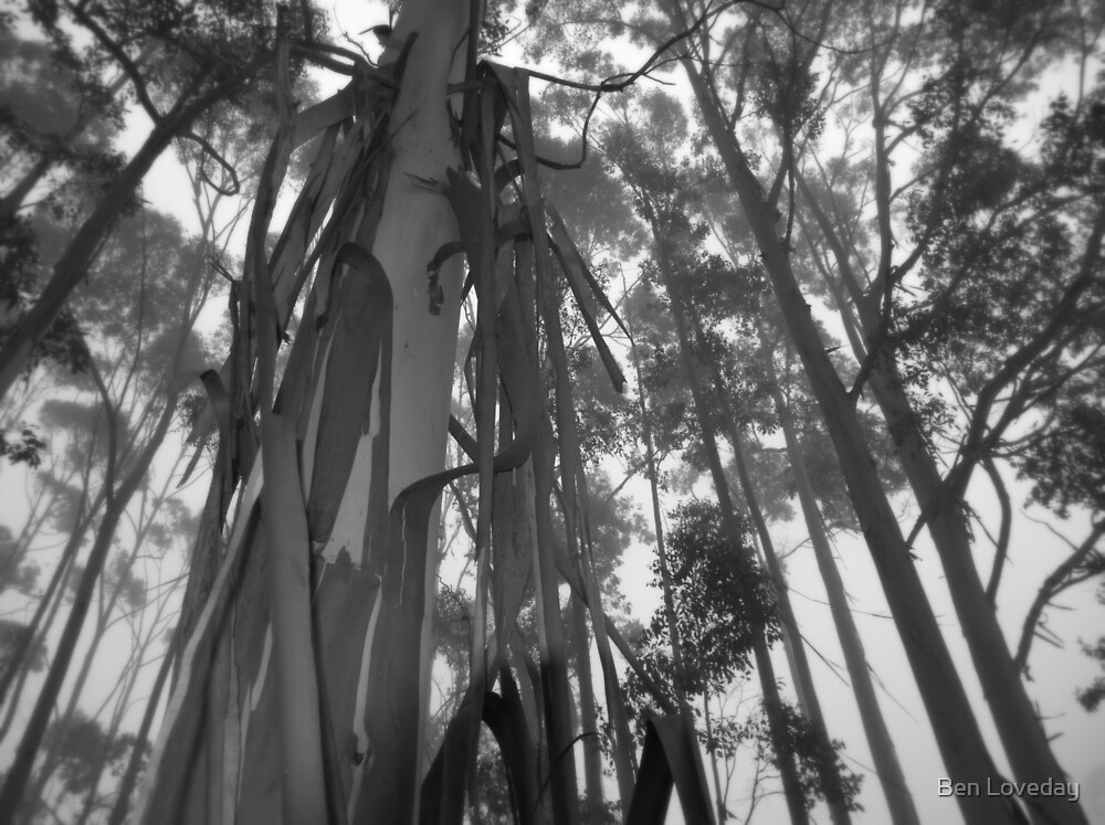 The Witch's Screams Echoing Through the Tree Tops by Ben Loveday