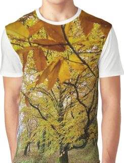 Deciduous forest in the autumn Graphic T-Shirt