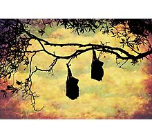 Sunset Forest Flying Foxes Photographic Print