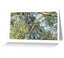 Wild Koala (dropbearus Australianus) Greeting Card