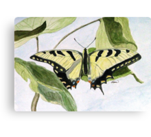 Male Eastern Tiger Swallowtail Canvas Print