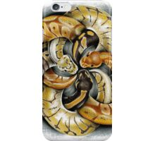 Python knot iPhone Case/Skin