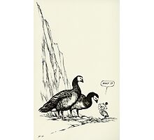 Barnacle gosling Photographic Print