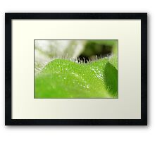 Softly Touch.... Framed Print
