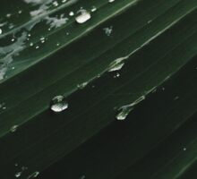 Palm leaf - Monsoon Sticker