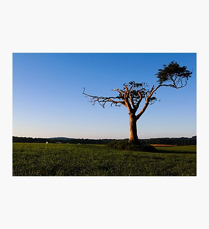 Look At Me, I'm A Tree! Photographic Print