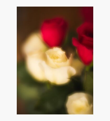 Soft Roses Photographic Print