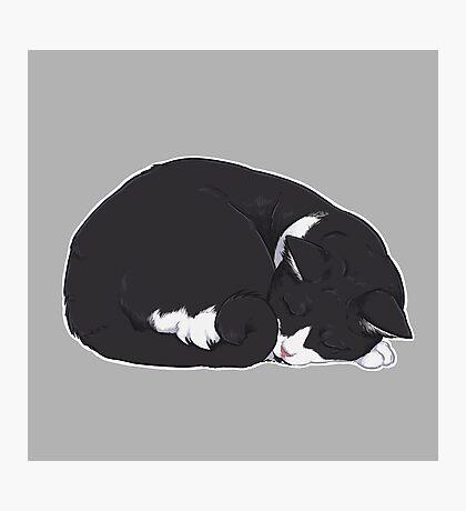 Tuxedo Cat Art - Grey Background / black and white socks sleeping curled up ball snooze nap cozy kitty meow lolcat Photographic Print