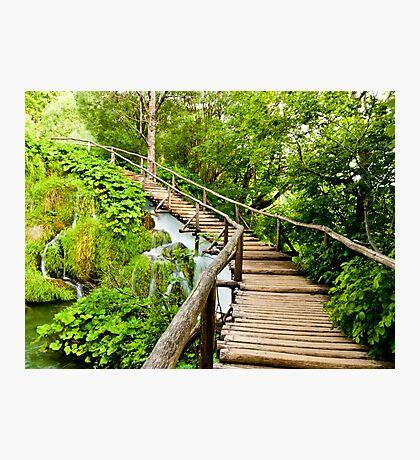 Wooden Walkway Photographic Print