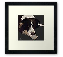 Border Collie patiently waiting Framed Print