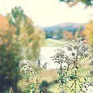 Autumn Garden by Caroline Mint