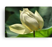 Hope equal Lotus Canvas Print