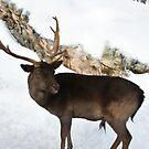 Young Reindeer....aka Caribou!!!!!  by Poete100