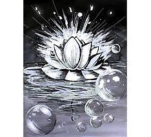 Waterlily Photographic Print