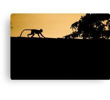 Monkey Silhouette Canvas Print