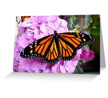 Imago Emerged! - Monarch Butterfly - NZ Greeting Card