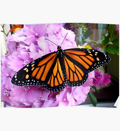 Imago Emerged! - Monarch Butterfly - NZ Poster
