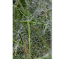 web of water Photographic Print
