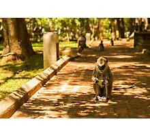 Mango Monkey Photographic Print