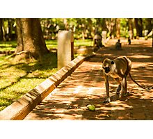 Monkey in the Way Photographic Print