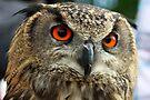 Portrait of an Owl by Jo Nijenhuis