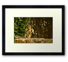 Typical Monkey Framed Print