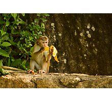 Typical Monkey Photographic Print