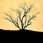 Dead Tree Silhouette by Tony Steinberg