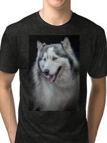 Siberian Husky  Tri-blend T-Shirt