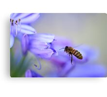 From every shining flower Canvas Print