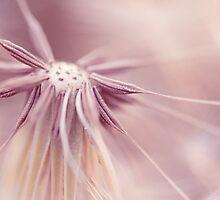 Sweet Dandelion by alyphoto