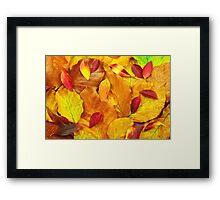 Autumn leaves. Framed Print