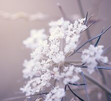 White Wildflowers by alyphoto