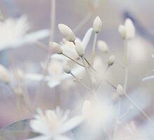 Peeking Flowers by alyphoto