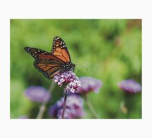 Autumn Beauty! - Monarch Butterfly - Otago - NZ Kids Clothes