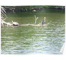 Turtle and cormorant share a branch Poster