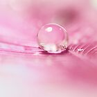 Hush, Water Droplet by alyphoto