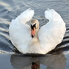Swan Cob - Woolston Weir, River Mersey by Chris Monks