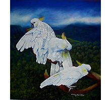 Cockatoo Lookout  Blue Mountains NSW Australia Photographic Print