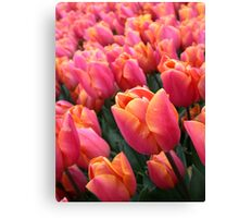 Dutch Vibrant Pink Tulips Field Spring Flowers Holland Canvas Print