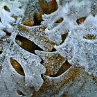 Frosted by Liz Ruest