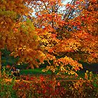 Autumn at its Best!! by jozi1