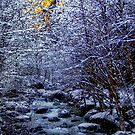 Christmas Card #2 by Charles & Patricia   Harkins ~ Picture Oregon