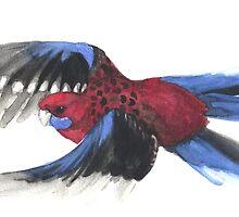 Crimson Rosella in Flight by Denise Faulkner