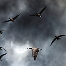 Geese in the Solar Eclipse by Rebecca Cozart
