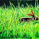 Rabbit in the Grass by Paul Mudie