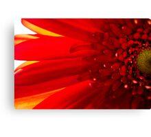 Red Macro Daisy Flower Canvas Print