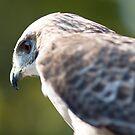 Falcon's Eye by AllanDavisJr