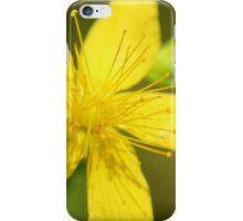 St. John's Wort iPhone Case/Skin